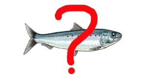 pescado en dieta vegetariana